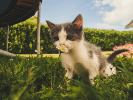 5 Ways to Reduce Litter Box Smell for Cats